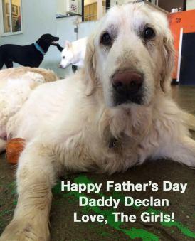 Daddy Declan!