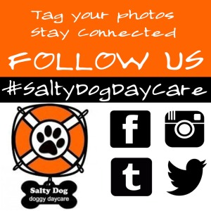 Salty Dog Daycare Tag