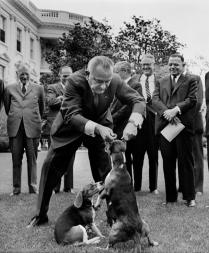 President Johnson Beagles
