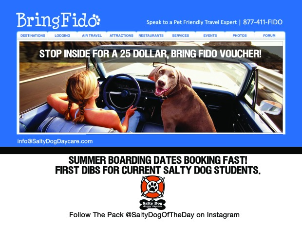 Salty Dog and BringFido.com