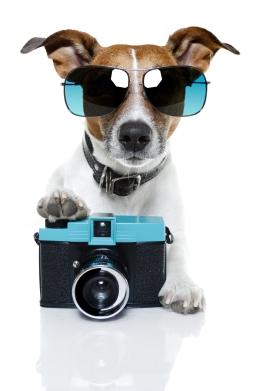 puppycamp8