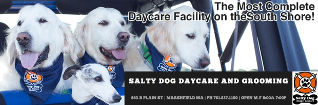 Salty Dog Header II