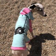 Annie at Salty Dog Daycare