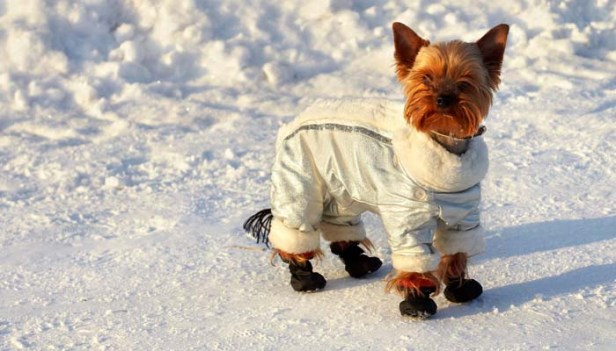 Best-Dog-Coats-for-Winter-and-Rain