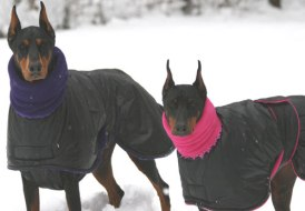 doberman-coats