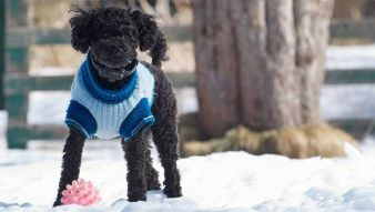 doggie-sweater.jpg.653x0_q80_crop-smart